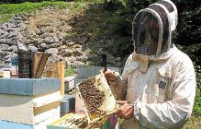 Thierry Salavin élève ses abeilles sur cinq sites fixes et quelques ruches mobiles « pour choper les essences spécifiques».
