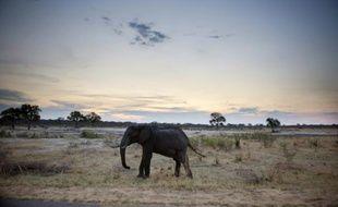 Un éléphant dans le parc national de Hwange au Zimbabwe