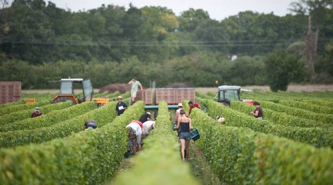 Des centaines de Bulgares exploités dans les vignes de Champagne