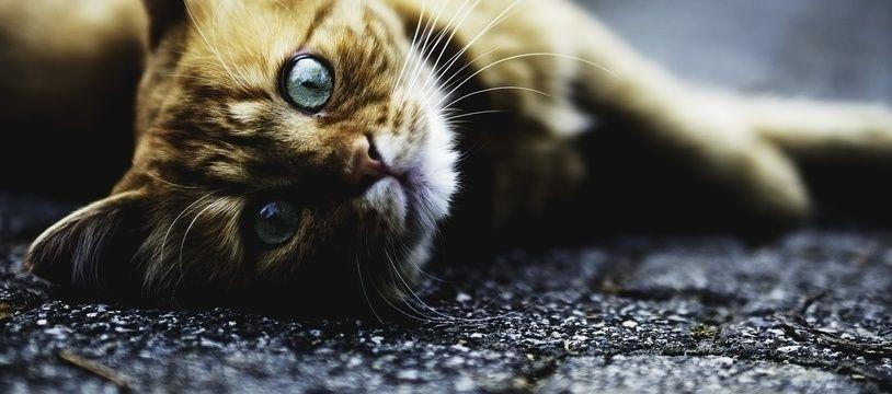 Un chat. Illustration.