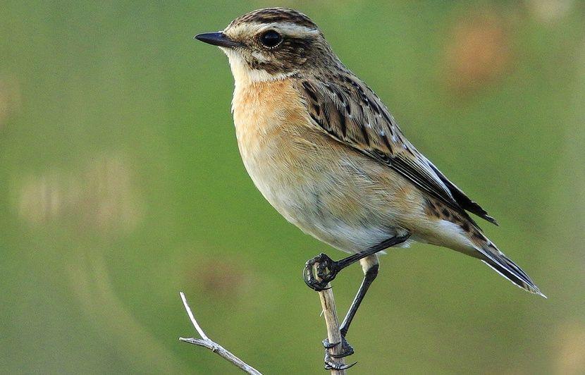 Nord-Pas-de-Calais : La moitié des oiseaux nicheurs menacée de disparition