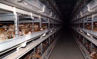 Capture d'écran de la vidéo de L214 sur un élevage de poules dans la Somme.