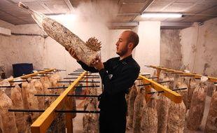 Maxime Quemin avec ses champignons de Marseille