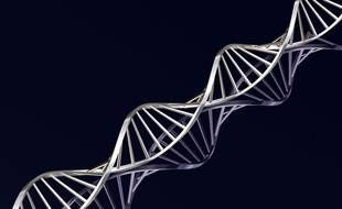 L'ADN en 3D.