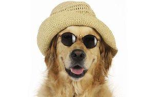 Parce que Toutou est tout pour vous... comment garder le contact à distance avec son chien