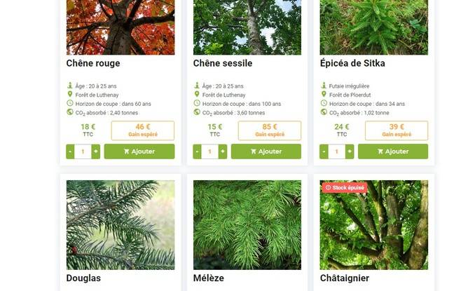 Plusieurs variétés d'arbres sont proposées à la vente.