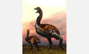 Cette image d'oiseaux-éléphants a été publiée par la Société zoologique de Londres, mardi 25 septembre.