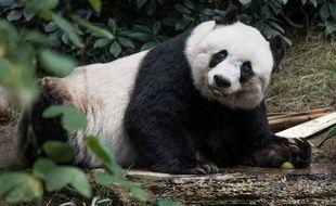 Jia Jia, la doyenne des pandas en captivité, s'est éteinte à 38 ans