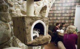 Le café des chats à Paris.