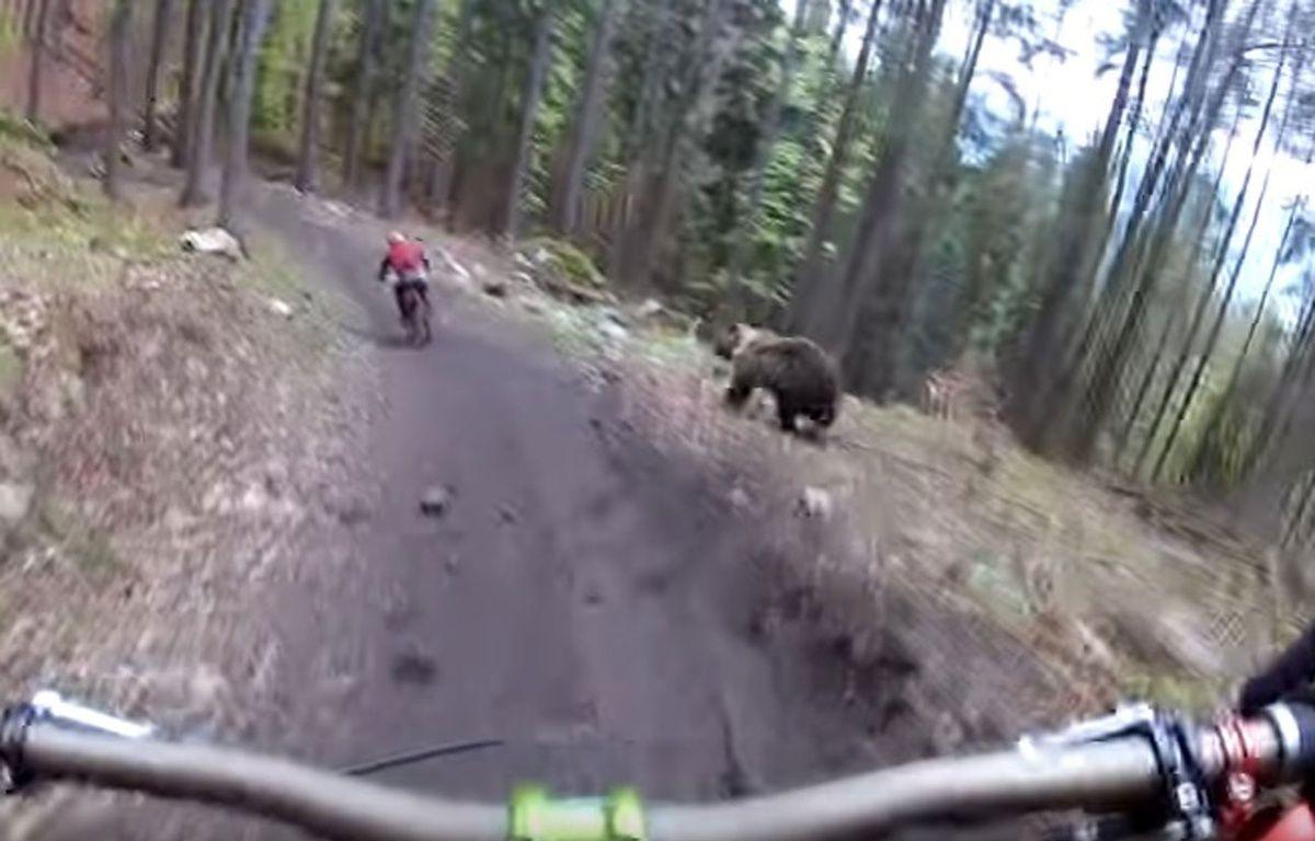 Un ours a poursuivi un cycliste en Slovaquie. – CAPTURE ECRAN YOUTUBE
