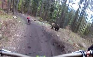 Un ours a poursuivi un cycliste en Slovaquie.