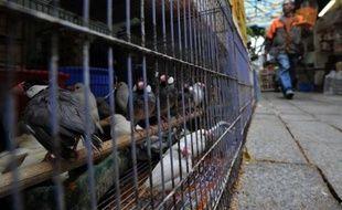 Les autorités sanitaires de la métropole de Shenzhen, dans le sud de la Chine, ont appelé la population à ne pas paniquer après le premier décès en 18 mois dû à la grippe aviaire dans le pays, a rapporté lundi l'agence Chine nouvelle.