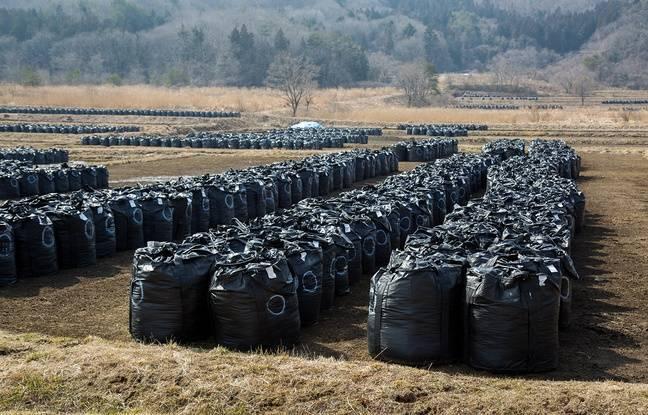 Des sacs de déchets issus de la décontamination alignés dans une rizière à Iitate (Fukushima).