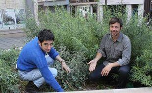 Jonas Obadia et Hugo Meunier pour «Merci Raymond», dans le cadre du permis végétaliser Paris, souhaitent installer un potager rue d'Aboukir dans le 2e arrondissement.