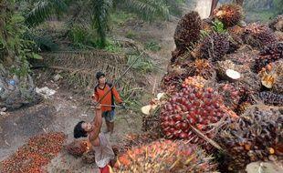 L'utilisation massive d'huile de palme dans l'industrie, des carburants aux cosmétiques en passant par l'alimentation, est accusée par les défenseurs de l'environnement de provoquer une déforestation massive.