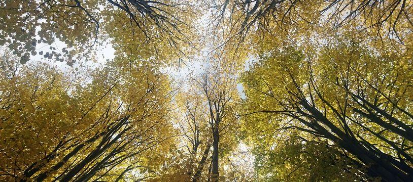 Une forêt. (Illustration)