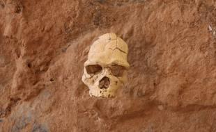 Le crâne de 450.000 ans conservé à Tautavel.