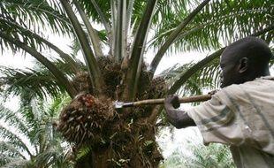 palmier a l'huile mots fleches