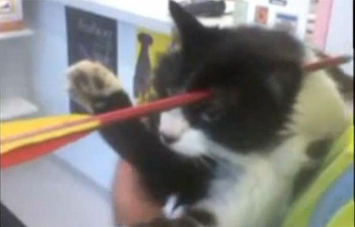 Moomoo, le chat néo-zélandais qui a survécu à une flèche plantée dans sa tête. – The New Zealand Herald