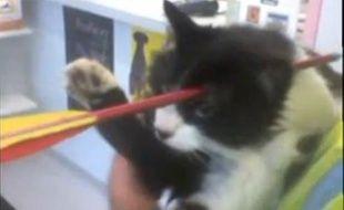 Moomoo, le chat néo-zélandais qui a survécu à une flèche plantée dans sa tête.