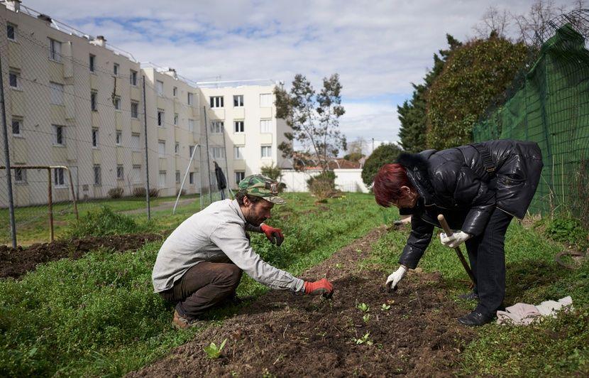 Toulouse : Des légumes cultivés en pleine ville, au pied des logements sociaux