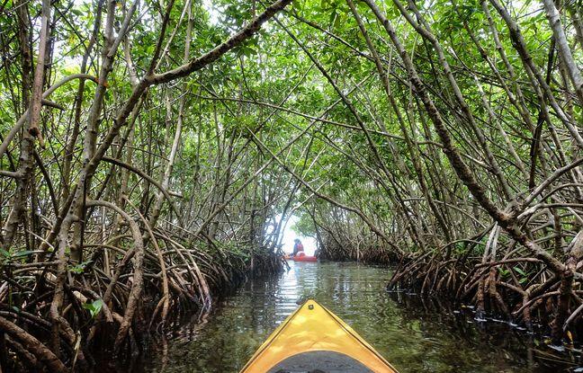 Domaine des palétuviers et des croyances occultes, le labyrinthe de la mangrove n'est accessible qu'en canoë.
