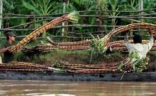 Des milliers de Cambodgiens ont été forcés de céder leurs terres aux producteurs de sucre, selon des organisations militantes, qui accusent les entreprises et le pouvoir de fermer les yeux pour écouler la production sur les marchés européens.