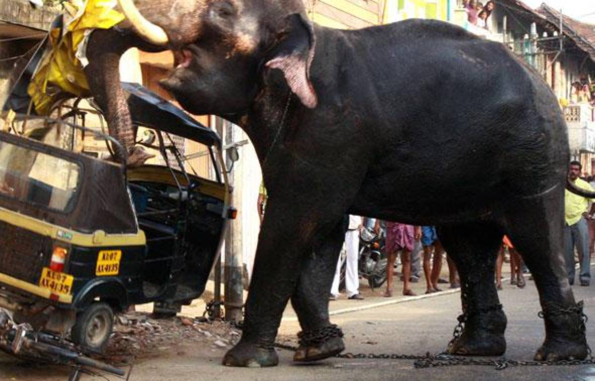 Un éléphant attaque un véhicule après avoir brisé ses chaînes à Kochi, Inde, le 27 février 2009. – STRINGER / REUTERS