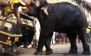 Un éléphant attaque un véhicule après avoir brisé ses chaînes à Kochi, Inde, le 27 février 2009.