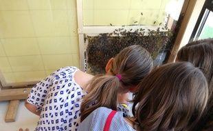 Des enfants d'une classe de CE2 de l'école Robert Schuman à Strasbourg cherchent la reine au milieu de la nouvelle ruche d'observation de l'école.