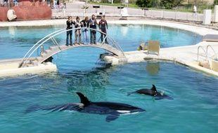 « Les orques sont très intelligents et dès cet été, le bébé voudra sans doute se mêler au show», sourit Jon Kershaw.
