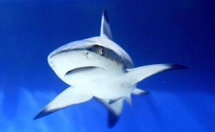Face à l'inquiétude du monde du tourisme, en Afrique du Sud et ailleurs comme à La Réunion, plusieurs entreprises se sont lancées dans la course pour trouver LA solution anti-requins. Mais il y a peu d'études en milieu réel.