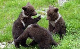 Des oursons dans les Pyrénées espagnoles, en 2016 (image d'illustration).