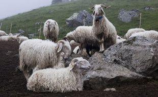 Des brebis dans une bergerie des Pyrénées. Illustration.