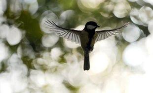 """La mairie de Moscou a annoncé mardi la création d'une banque de chants d'oiseaux téléchargeables gratuitement """"pour former l'esprit vert chez les moscovites""""."""