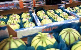 Des melons (illustration).