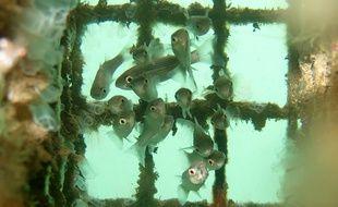 Les Biohut d'Ecocean protègent les poissons durant leur croissance.