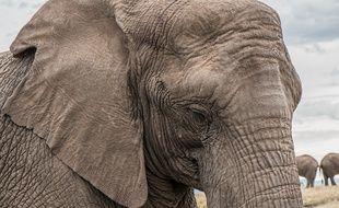 Avec un peu d'entraînement, à vous la mémoire d'éléphant