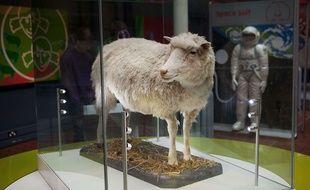 La brebis clonée Dolly, morte en 2003, est exposée au Muséum d'Edimbourg, en Ecosse.