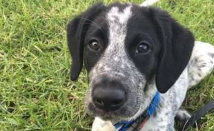 Grizz, un chien renifleur, a été abattu le 17 mars 2017 par la police à l'aéroport d'Auckland (Nouvelle-Zélande) après avoir échappé à son maître.Il s'estpromenélibrement sur le tarmac pendant troisheures, poursuivi par le personnel de sécurité de l'aéroport.