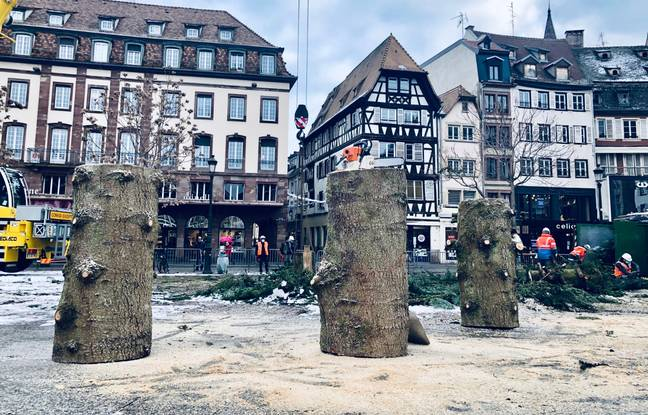Le tronc du grand sapin a été débité en trois morceaux de 800 kg chacun.