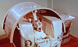 Laïka, la chienne envoyée dans l'espace par l'URSS, en 1957.