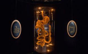 Photo montrant l'appareil digestif, prise en 2018 lors d'une exposition intitulée «Microbiote», à la Cités des Sciences et de l'Industrie, à Paris