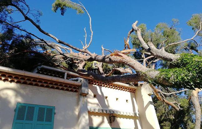 Un arbre tombé après le passage d'une tornade à Sausset-les-Pins.