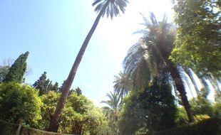 Des palmiers. (illustration)