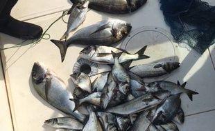 Une bonne pêche mais totalement illégale.