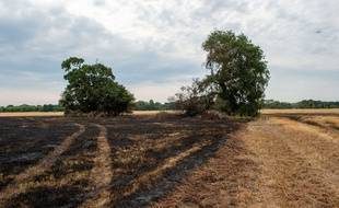 Un champ après un incendie. Illustration.