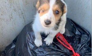 Photo d'un chien abandonné dans une poubelle près de Guingamp, dans les Côtes d'Armor.