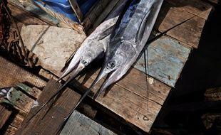 Un Marlin pêché à la Havane à Cuba, le 16 novembre 2012.