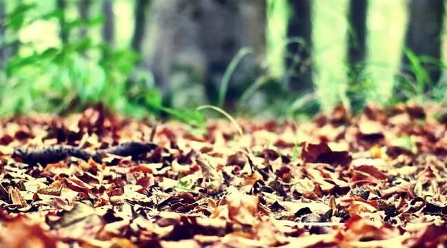 Agroécologie : La « litière forestière fermentée » deviendra-t-elle le biofertilisant du futur ?
